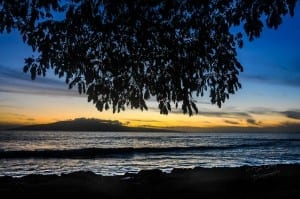 Hanging trees at sunset @ Laniopo Beach on Maui's West Side